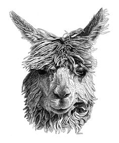 alpaca drawing - Google Search