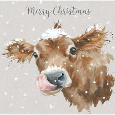 - First Taste of Snow Luxury Boxed Christmas Cards Luxury Christmas Cards, Painted Christmas Cards, Boxed Christmas Cards, Watercolor Christmas Cards, Watercolor Cards, Christmas Art, Vintage Christmas, Christmas Drawings For Cards, Cow Painting
