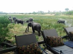 Botswana's Savute Channel is teeming with elephant -- Manager Nuno Cardoso reports that they have been lingering around Savuti Camp for hours in the heat of the day, where everyone enjoys the amazing sights over brunch. South Africa Safari, Wilderness, Places To Visit, Brunch, Elephant, Camping, Channel, Pictures, Animals