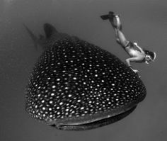 Diving with a Whale Shark. Definitely on my bucket list.