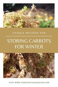 There is nothing better than eating a fresh carrot in the middle of the winter, tasting like it just came from the garden! This is by far the BEST method for long-term storage that I have tried, and will keep your carrots from the garden available, crisp and sweet til spring! | It's My Sustainable Life @itsmysustainablelife #storingcarrots #storingcarrotsforwinter #storingcarrotsfromgarden #storingcarrotsoverwinter ##itsmysustainablelife