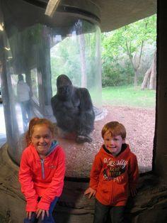 Gorilla Bomber