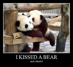 I Thought Pandas Didn't Like Romance