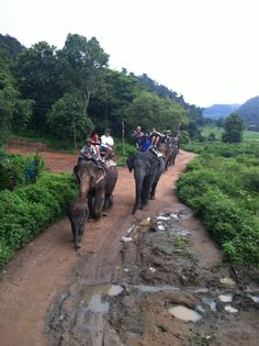 Some more elephant riding in Thailand via Courtney