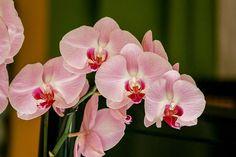 Większość z nas kocha kwiaty, jednak z cierpliwością do ich pielęgnowania to już niestety różnie bywa… Na szczęście istnieją proste sztuczki, dzięki którym przy niewielkim wysiłku z naszej strony możemy dłużej cieszyć się pięknymi kwiatami. Zobaczcie,