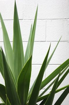 hello green darling! #inspiration #jungle #urbanjungle