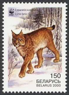 [2000 Belarus Post Stamp - Lynx Cat]  * *[JUST RECENTLY, THE U.S. PUT OUT A SERIES OF STAMPS ON ENDANGERED SPECIES. A SAD AND SORRY  DAY TO SEE THAT. MOST OF THE STAMPS NOW ARE THE 'FOREVER' SERIES WHICH HAVE NO PRICE IN THE CORNER. I FIND IT IRONIC BECAUSE 'EXTINCTION IS FOREVER.']