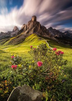 Fotografia Alpenrose de Nicholas Roemmelt na Nature Pictures, Cool Pictures, Beautiful Pictures, Beautiful World, Beautiful Places, Landscape Photography, Nature Photography, Photography Tips, Image Nature