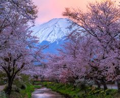 Fuji - Sakura - Sunset by Natasha Pnini
