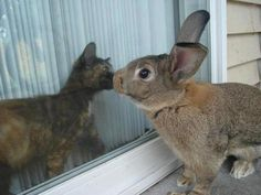 I invite you to see my Easter board cover images | http://www.pinterest.com/usinazen/ | Happy Easter! |Courtesy of Cats Looking Out Of The Window
