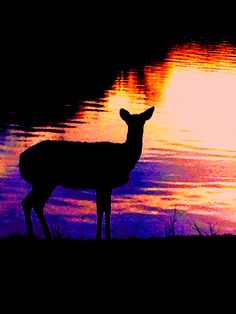 deer nature on fire