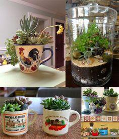 ideias de como decorar a casa com cactos e suculentas usando xícaras, panelas e aquários.
