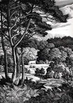 """""""The Open Forest"""" (from New Forest 1966)"""