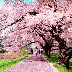 Find images and videos about girl, love and cute on We Heart It - the app to get lost in what you love. Beautiful Roads, Beautiful Landscapes, Beautiful Gardens, Abstract Landscape, Landscape Paintings, Spring Images, Cherry Blossom Tree, Fall Pictures, Flowering Trees