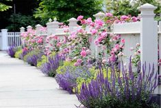 Flowers in front and through a white picket fence. Garden Spaces - traditional - landscape - other metro - dabah landscape designs. Chicago Landscape, Design Jardin, Garden Shrubs, Garden Path, Garden Fencing, Easy Garden, Reed Fencing, Planting Shrubs, Potager Garden