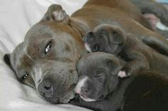 So sweet!! #dog #family #love