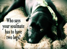 Four-legged #soulmate. #dog