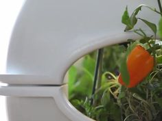 The Aqualibrium Garden - The Future of Food by Aqualibrium — Kickstarter.  Aquaponic system.