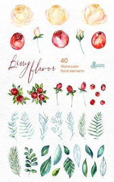40 Watercolor Floral Elements hand by OctopusArtis Watercolor Flowers, Watercolor Paintings, Watercolors, Watercolor Illustration, Berries, Greeting Cards, Artsy, Clip Art, Hand Painted