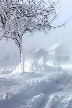 Winter ~ Lands of Ice & Snow ~ Blizzard Cold I Love Snow, I Love Winter, Winter Day, Winter White, Winter Season, Winter Christmas, Winter Storm, Winter Schnee, Winter Magic