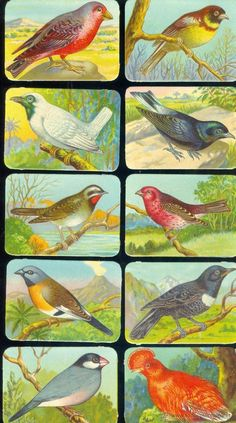 Láminas de cromos troquelados antiguos- Pájaros, cromos alemanes de 1940