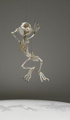 Bugs Bunny Cartoon Skeletons By Hyungkoo Lee