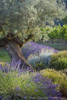 Lavender Mehr