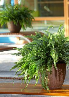 Assortiment overzicht - Air So Pure Leaf Coloring, New Leaf, Lush, Tropical, Herbs, Garden, Garten, Lawn And Garden, Herb