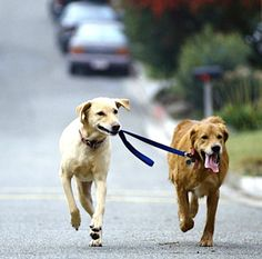 Another series of great Dog Walking Tips. #walk #dog #tips