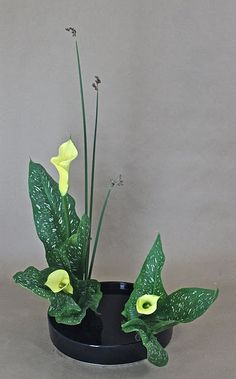 One of the special characteristics of Ohara-ryu Ikebana is it& use of water flowers -- water lily, lotus, calla lily, and pond lily. Ikebana Arrangements, Ikebana Flower Arrangement, Floral Arrangements, Arte Floral, Flower Show, Flower Art, Cactus Flower, Pictures Of Calla Lilies, Arreglos Ikebana
