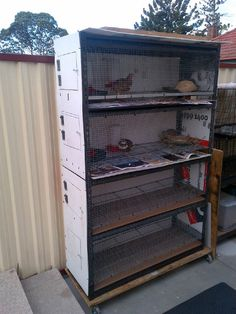 quail shelves
