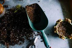 Pot Some of Your Plants Succulent Soil, Cacti And Succulents, Garden Soil, Garden Beds, Garden Art, Container Gardening, Gardening Tips, Bucket Gardening, Gardening Services