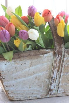 Tulips say Spring!