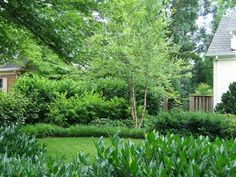 privacy screen contains skip laurels fronted by Virginia sweetspire and two other layers of perennials in the foreground, plus a River Birch. Photo: GreenHeart Garden Design. Skip laurel will not grow in zone 5, switch out with mountain laurel or burning bush.