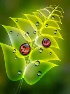 Ladybug Ladybug - Visitors by PeterPawn on DeviantArt