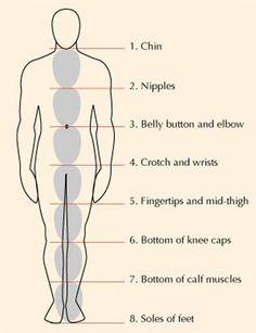 anatomische proporties