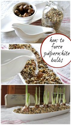 How to Force Paperwhites. From creativecaincabin.com.