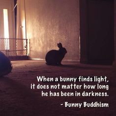 When a bunny finds light, it does not matter how long he has been in darkness. - Bunny Buddhism