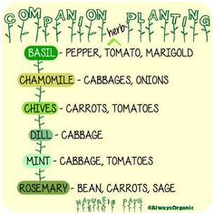 companion gardening with herbs