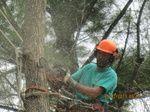 Winslow Maine - ARBORMORE TREE Tree Cutter, Maine