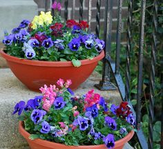 Pot plant ideas. Using contrasting colours can have a striking effect