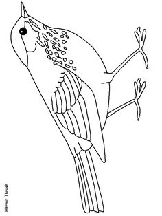 nebraska state bird coloring pages - photo#12