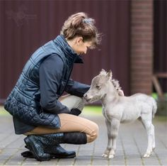 This pony is adorable! Tiny Horses, Cute Horses, Horse Love, Beautiful Horses, Animals Beautiful, Amazon T Shirt, Animals And Pets, Funny Animals, Miniature Ponies