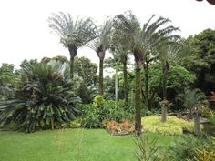 Palm dominated lawn at Roberto Burle Marx's Sitio