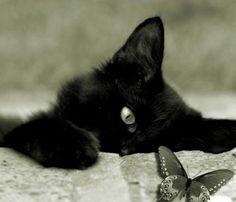 Black Kitten & Butterfly