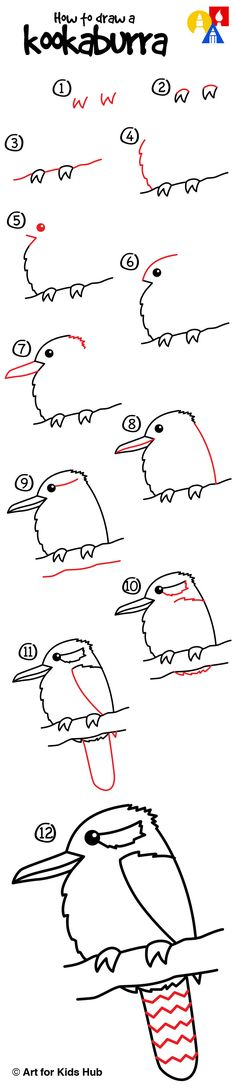 How to draw a kookaburra!