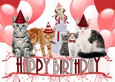 Shop Cat Lover Birthday from the Group Card created by PAWSitivelyPETs. Happy Birthday Video, Happy Birthday Funny, Cat Birthday, Happy Birthday Greetings, Birthday Greeting Cards, Birthday Memes, Birthday Stuff, Birthday Messages, Pink Cards