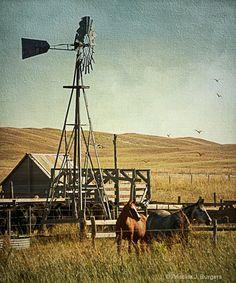 It's the Ranching Life for Me (Nebraska) Photograph at BetterPhoto.com