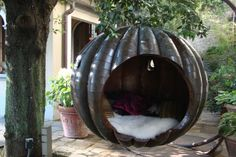 When I become a kajillionaire I will buy a giant magical pumpkin and I will never ever come out.