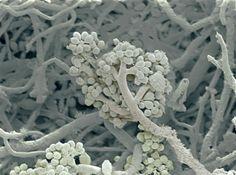 micro world, microscope